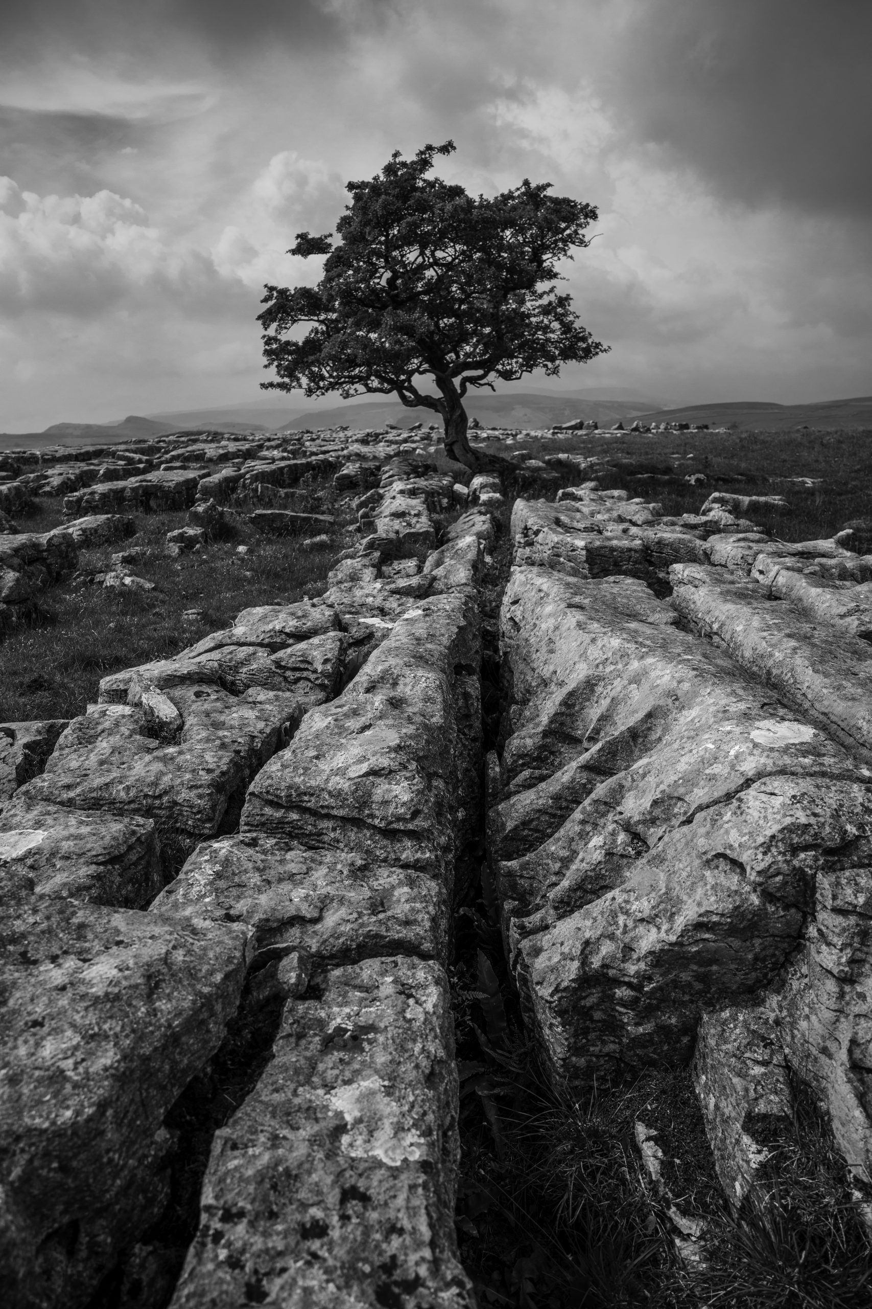 """A lone tree stands out against the harshly contrasting limestone pavement in the Yorkshire Dales"""" width="""""""" height="""