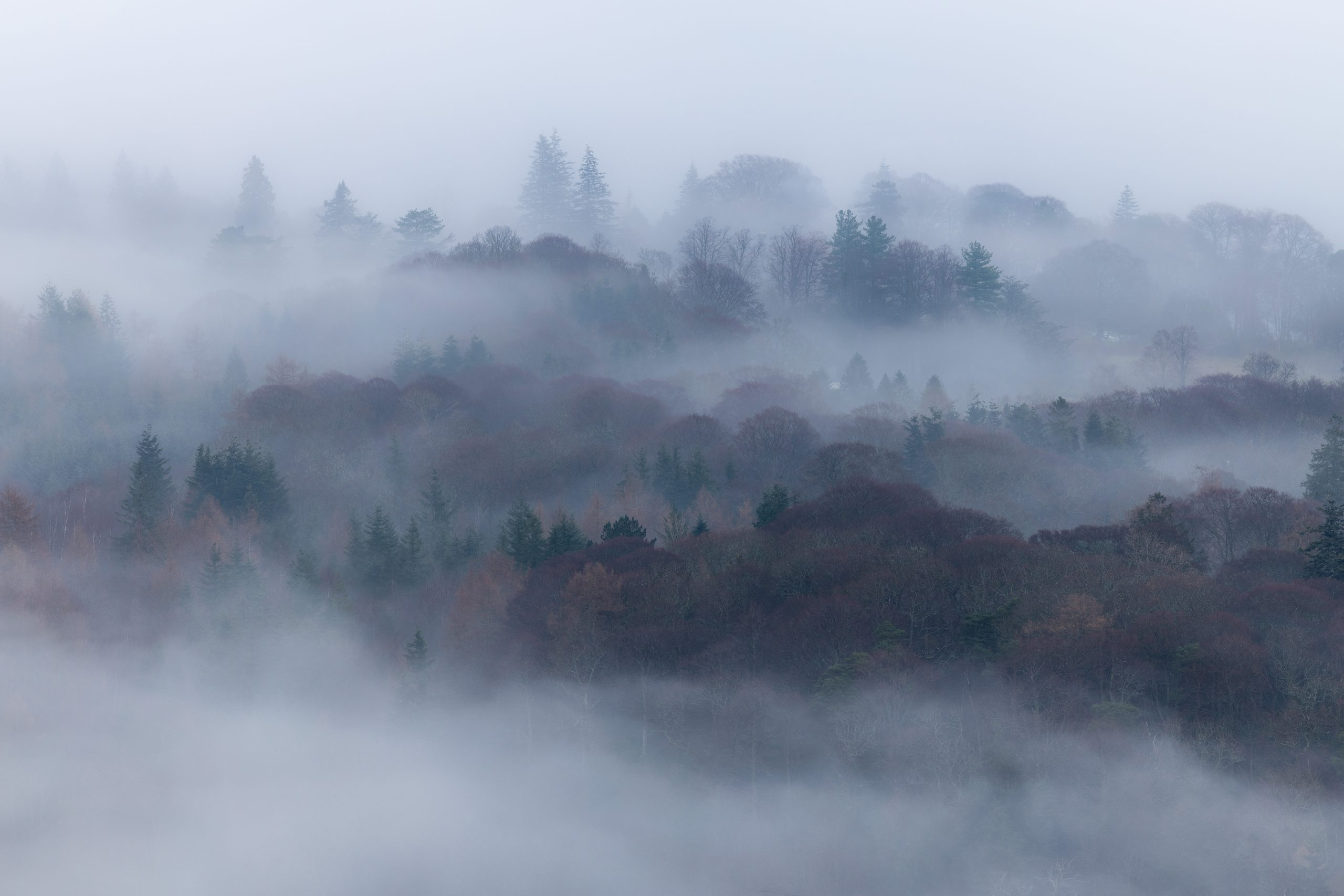 Thick fog and cloud inversion masking the trees in winter in the Lake District