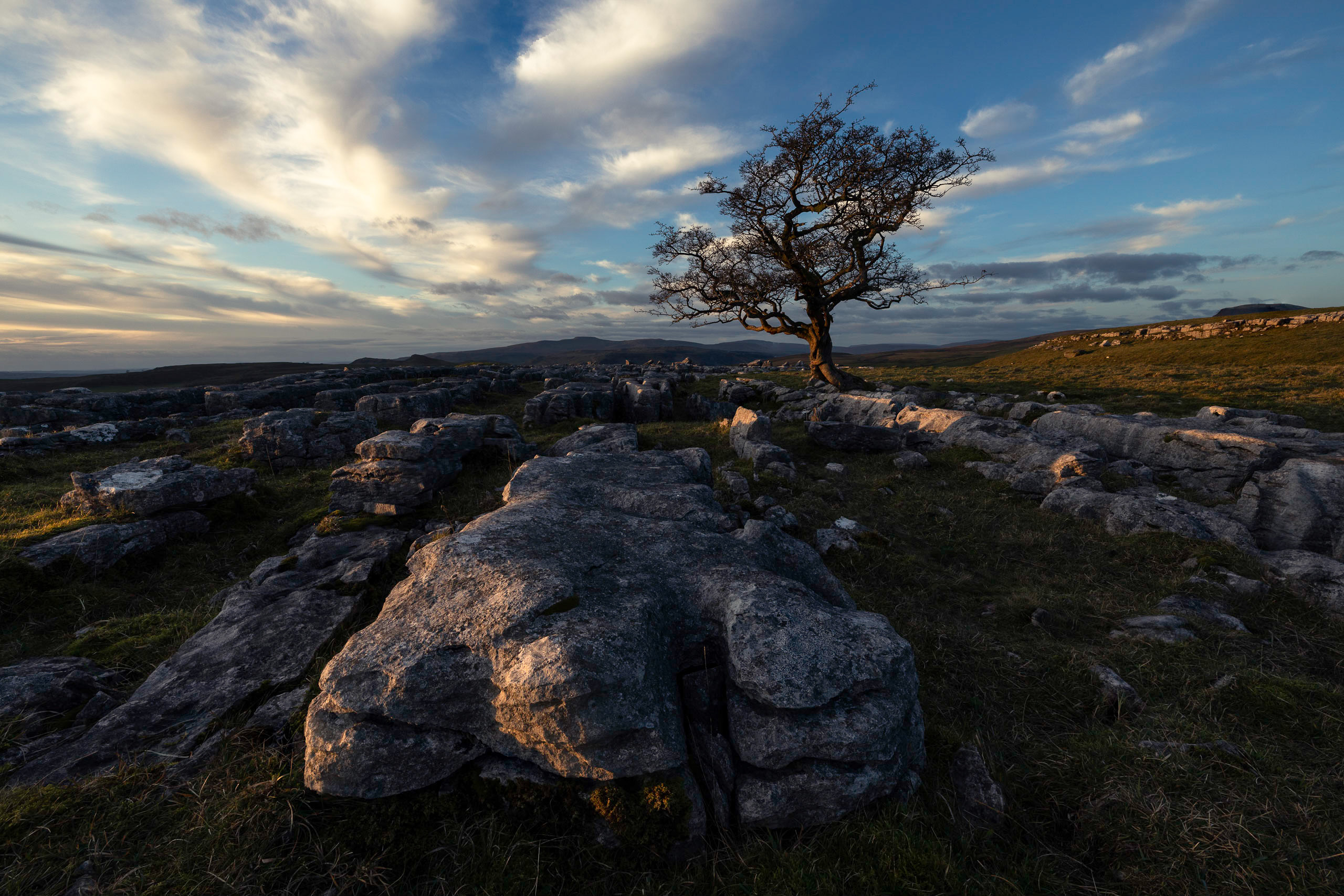 Limestone pavement and a hawthorn tree in front of Ingleborough in the Yorkshire Dales - a typical view on a guided walk